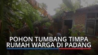 Pasca Hujan dan Angin Kencang,Pohon Tumbang dan Timpa Rumah Warga di Kota Padang