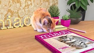 Miaou ! La revue