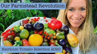 Our Farmstead Revolution: Here Is The Full List:  Which Heirloom Tomatoes Im Growing In 2020