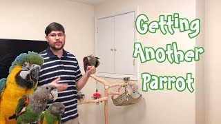 Getting Another Parrot - Good Idea or Not?