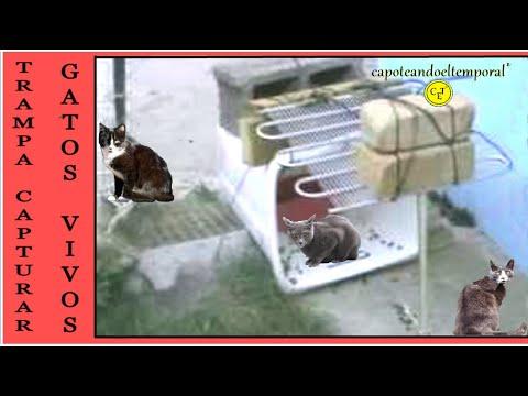 trampa para capturar gatos ( trap to capture cats )