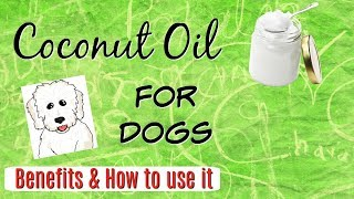🥥 Coconut Oil for Dogs, Benefits and how to use it, CDT I Lorentix