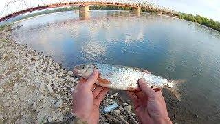 На что ловить подуста в рыбалке 3