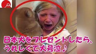 海外の反応外国人の少女に、日本犬をプレゼントしたら、うれしくて大号泣♪