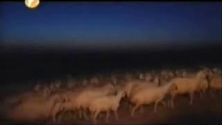 preview picture of video 'Bozkırın Gücü 2. kısım ( Sivas Kangal Köpeği Belgesel )'