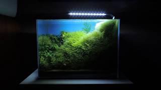 21L- Cube Garden mini M- Dawid Wyciślik
