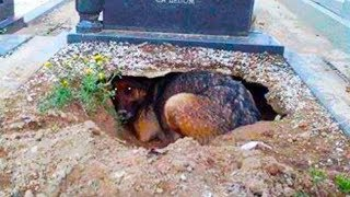 Cemetery Visitor Thought Dog Was Grieving, Until It Started Digging.