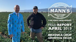 Field Report | April 2019 - Brassica Crop Growth and Yields