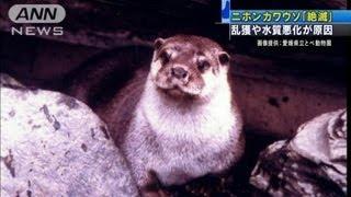 ニホンカワウソ「絶滅種」に・・・30年生息確認できず12/08/28