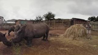 Care for wild Africa: Send Jak to save the Rhino!