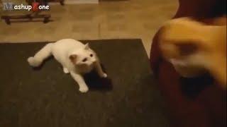 приколы июль 2018 приколы с котами и животными смешное видео коты кот смешные падения недели сборка