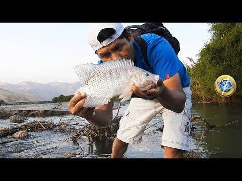 Parentesi di sospensione per pesca