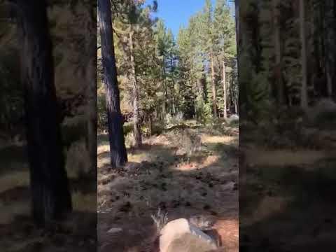 Video Of Fallen Leaf Campground, CA