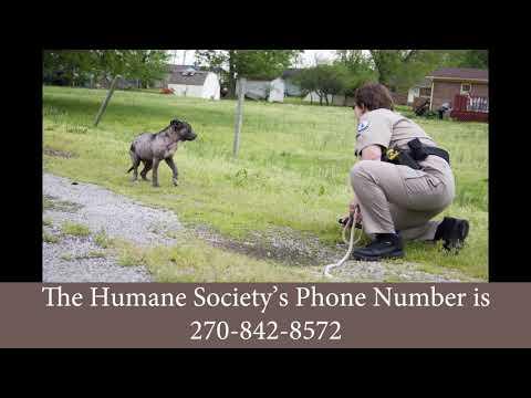 Animal Control Division