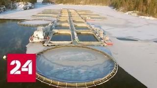 Схема рыбного цеха с расстановкой оборудования и описанием