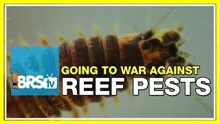 Week 49: What you should be doing to prevent reef tank pests | 52 Weeks of Reefing #BRS160