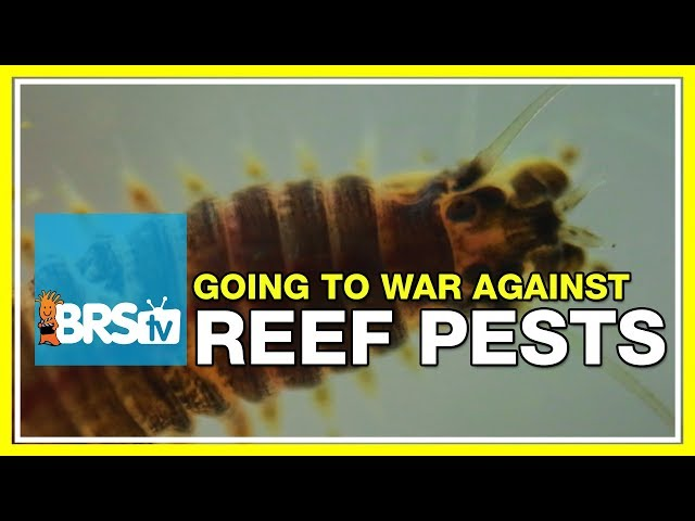 Week 49: How to prevent and treat reef tank pests | 52 Weeks of Reefing #BRS160