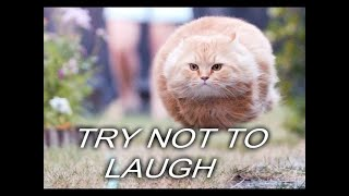 Don't Laugh or you LOSE! | Try not to Laugh #1