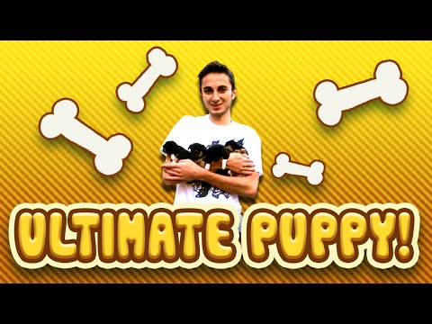 PUPPY VLOG – Funny Puppies playing! (Captain, Crazy Craft, Voids Wrath)