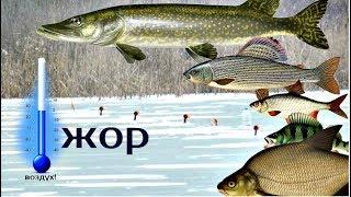 При какой температуре рыба перестает клевать