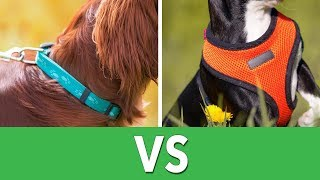Dog Harness Vs. Collars