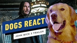 Dogs React to the John Wick 3 Trailer