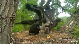 Decorah Eagles~Wingathon-All Three  Eaglets Compete_5.25.20