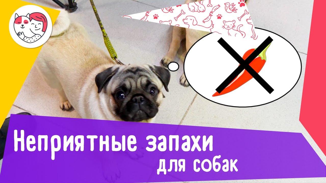 5 запахов, которые собаки терпеть не могут