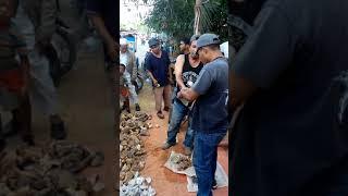 Lelang Murah Batu Akik Kaya Jual Kacang