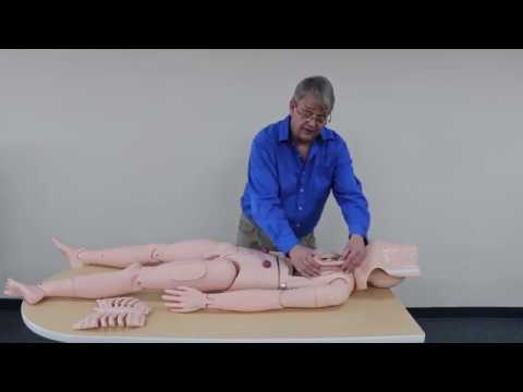 Adult Nursing Manikin Assembly