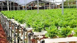 how to grow tomato, &, vegetable, farming