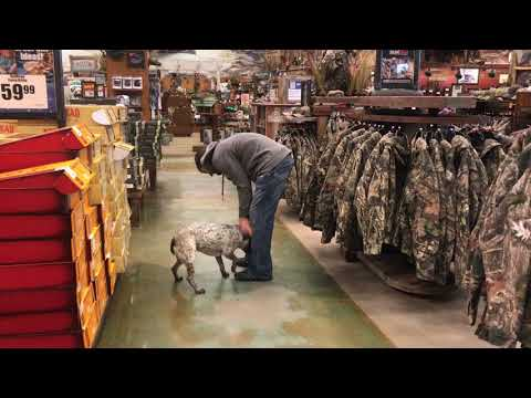 1 Year Old Pit Bull Heeler Mix | Best Pit Heeler Mix Dog Training Oklahoma | Board and Train