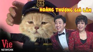 Mèo 'Hoàng Thượng' Cực Thần Thái Đốn Tim Trấn Thành Và Việt Hương l VieTalents Official