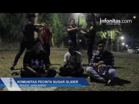 Komunitas Pecinta Sugar Glider Bekasi Gelar Silahturahmi