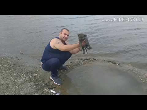 Нашёл из болото 🐶 щенок