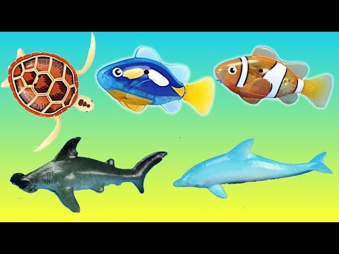 Robotic Fish Turtle Sea Animals Educational Toys │ Wild Animals Surprise Eggs in the Water