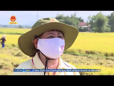 Nhà Máy Phân Bón Nhật - Nam đồng hành chống virus covid19 cùng bà con mùa bội thu