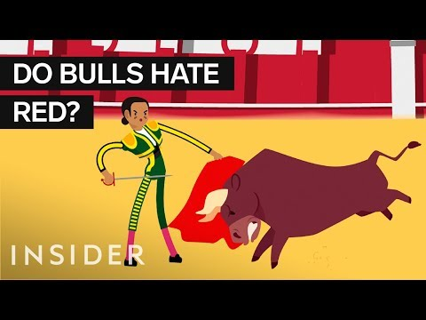 Why are Bullfighter Capes Red?