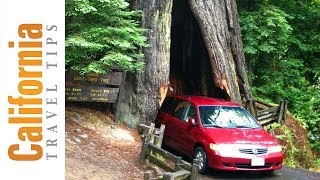Avenue of the Giants - California Redwoods | California Travel Tips