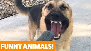 Funniest Pets & Animals of the Week | Funny Pet Videos
