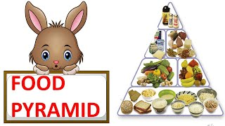 FOOD PYRAMID || HEALTHY DIET || HEALTHY PLATE || SCIENCE VIDEO FOR CHILDREN