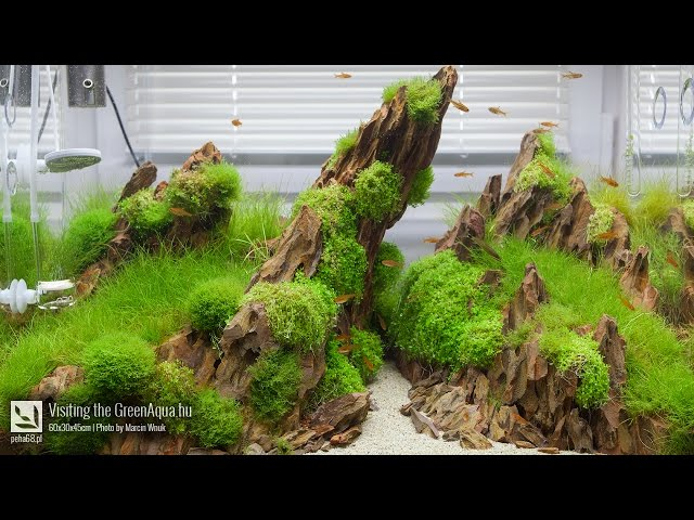 Green Aqua - Aquascaping gallery