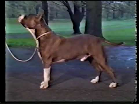 AKC 1989 The American Staffordshire Terrier (2)