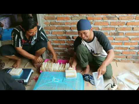 0856-4840-4735 (Bu Sofi) Pusat Produsen Sarang Lebah Madu Hitam di Jakarta Batam Sidoarjo Blitar