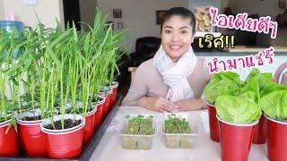 ทำแก้วปลูกผักในคอนโด ปลูกผักบนระเบียง สำหรับคนพื้นที่น้อย กินอยู่พอเพียงในต่างแดน