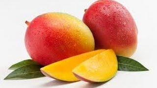 Едем грузиться манго в Нидерландах