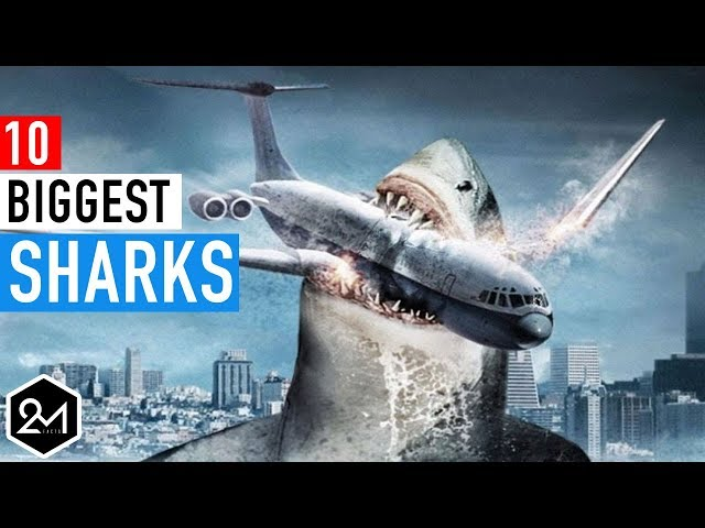 Top 10 Biggest Sharks In The World Ever Recorded