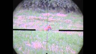 Foxing With Snipercam 3