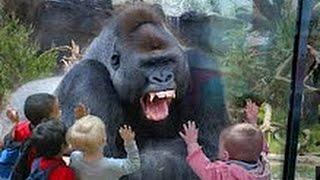 NAPADI Životinja U Zoo Vrtu - [Kompilacija Videa]