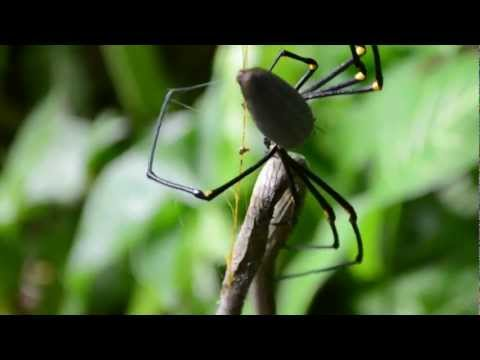 Giant Spider Eating A Snake Is Absolutely Horrifying Siam Longings: Food, I...